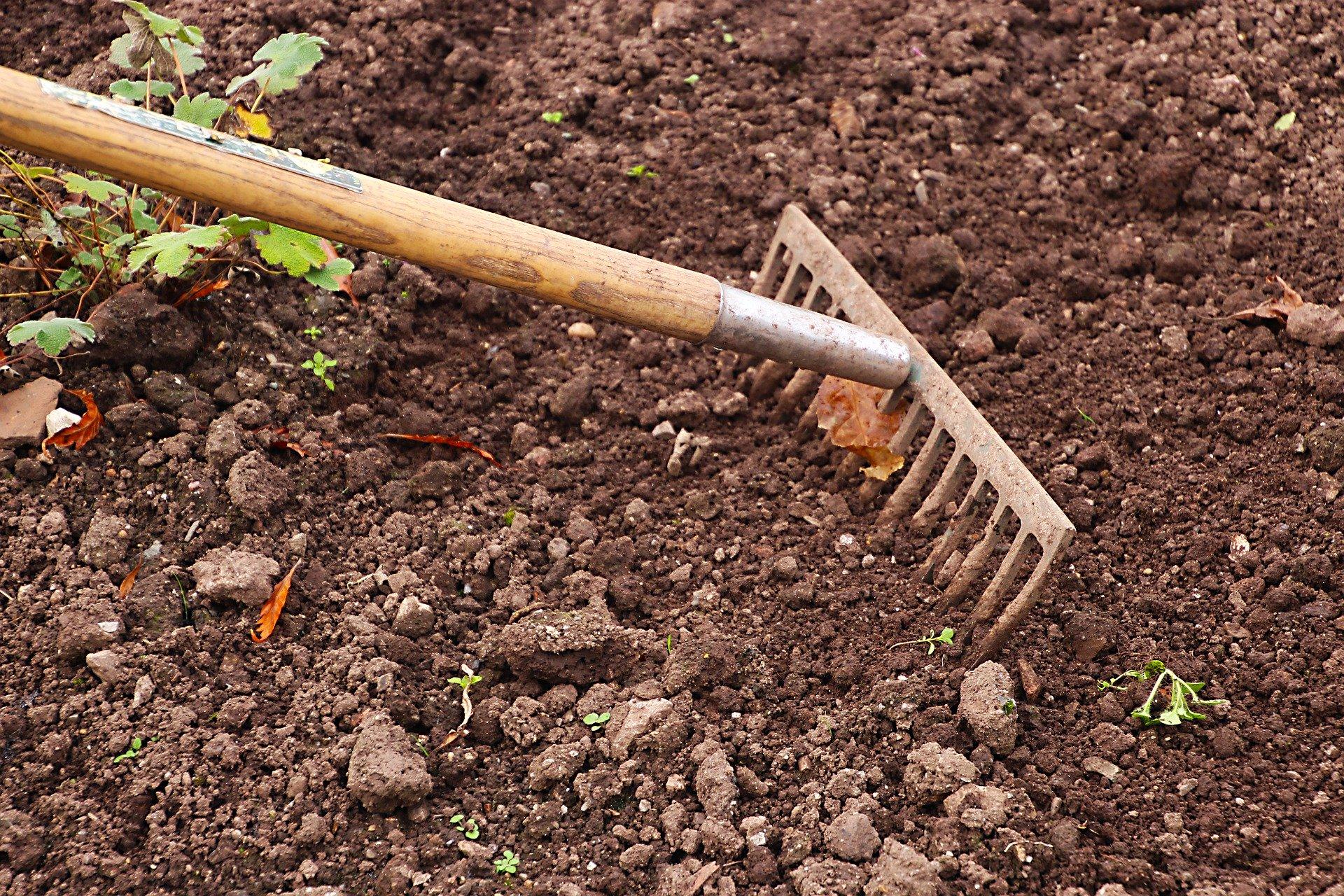 Spulchnianie ziemi w ogródku przy pomocy grabii